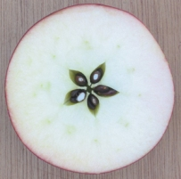 apple-star1